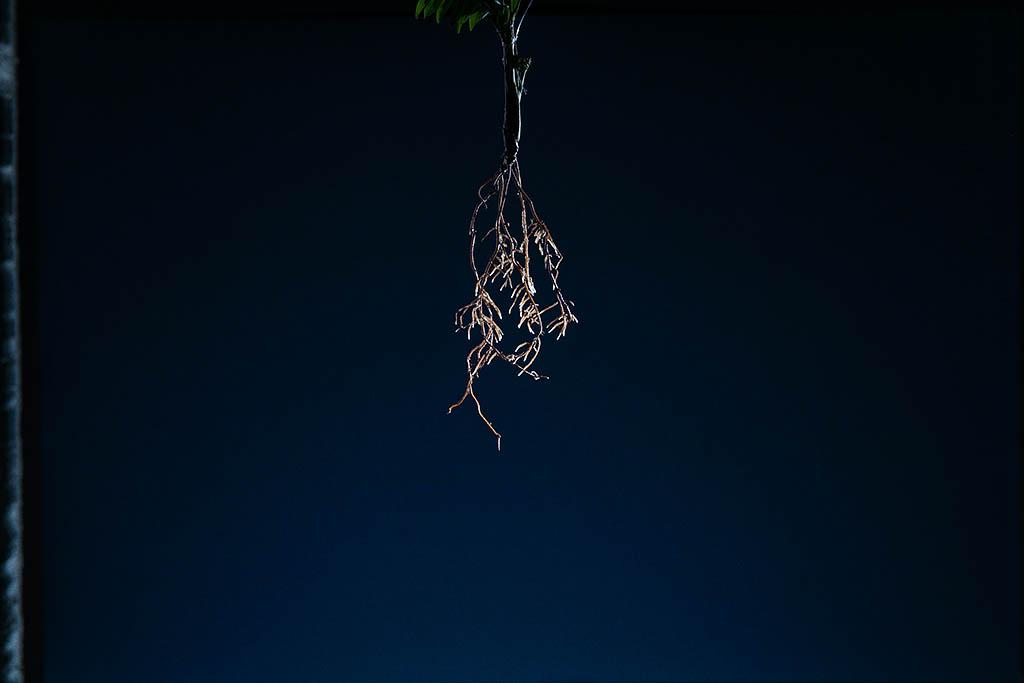 thesweetonions-markak-002